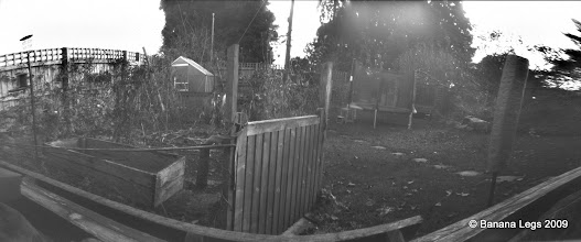 "Photo: Wide angle view of the garden; Birds custard powder tin, 10""x3"" pre-flashed paper negative, 1min 30 sec."