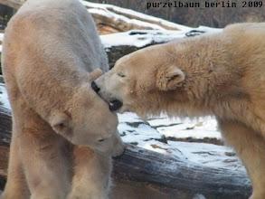 Photo: Gianna weiss es zu wuerdigen - Bussi fuer Knut :-)