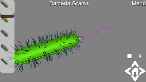 3D Gram Bacteria Explorer