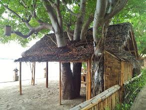 Photo: treehouse