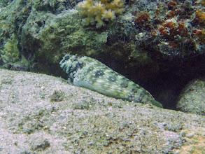 Photo: Salarias fasciatus (Jewelled Blenny), Naigani Island, Fiji