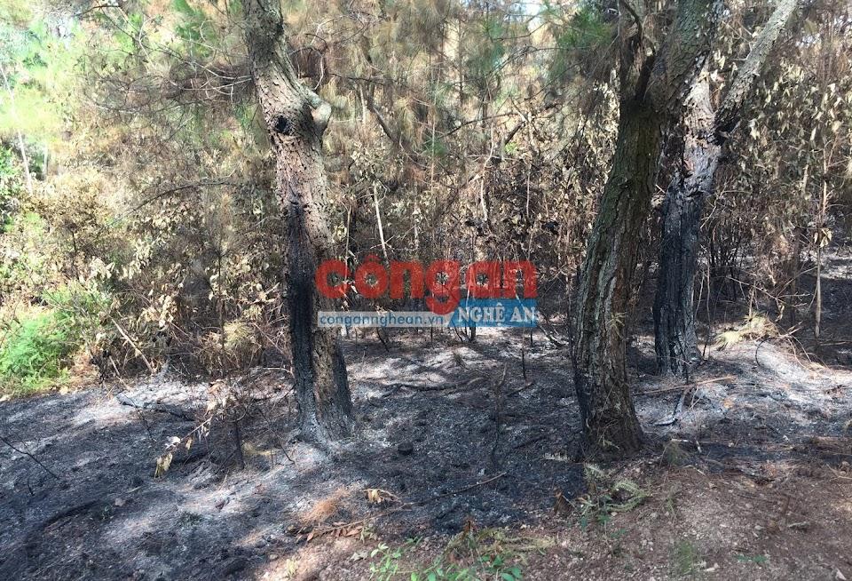 Rừng Thông do UBND xã Thượng Sơn quản lý cũng bị Nguyễn Văn Lương đốt cháy