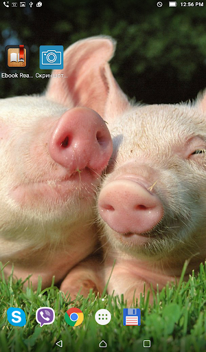 Pigs in love. Live wallpaper