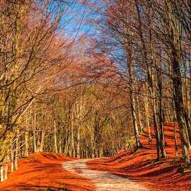 Auitumn landscape by Ivanica  Monica - Landscapes Forests ( forest, beauty, rural, poland, yellow, scenery, scenic, empty, red, beautiful, path, view, trip, fall, leaves, road, car, street, golden, season, highway, alley, park, vibrant, green, nature, woods, tree, way, orange, foliage, environment, sunlight, outdoors, light, background, sunset, plant, pathway, autumn, travel, drive, landscape, colorful )