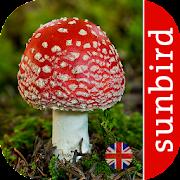 App Icon for Mushroom Id - British Fungi App in Czech Republic Google Play Store