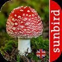 Mushroom Id - British Fungi icon