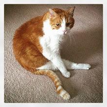 Photo: Mr. Tom ballet portrait #intercer #cat #cats #pet #pets #catsofinstagram #petsofinstagram #dance #ballet #portrait #orange #white #funny #cute #play #artist #tail #🐱 #😺 - via Instagram, http://ift.tt/1ESsmna