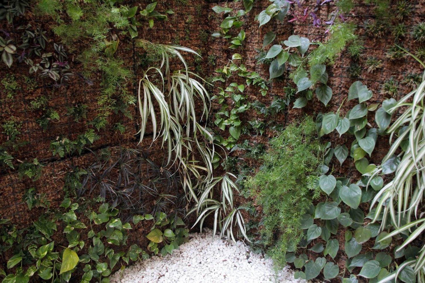 Plantas para Jardín vertical Leaf.Box en Valencia