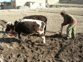 Photo: Agriculture à 4000 m,pas facile !