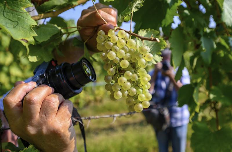Un grappolo d'uva e il fotografo macro. di frapio59