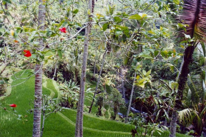 Photo: #135-Rizières en terrasse-Bali