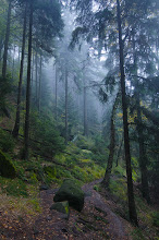 """Photo: Dies ist mein Beitrag für den +WEX PhotographieFotowettbewerb, Thema: Landschaft. Die Aufnahme entstand im National Park """"Sächsische Schweiz"""" unterwegs im Wald.  #mitwexgewinnen  #plusphotoextract  #saxony  #nationalpark  #nature  #landscapephotography curated by +Margaret Tompkins, +Ke Zeng, +David Heath Williamsand +paul t beard+Landscape Photography +HQSP Landscape #hqsplandscape  #1000photographersaroundtheworld +10000 PHOTOGRAPHERS around the Worldby +Robert SKREINERand +Walter Soestbergen"""