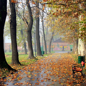Autumn by Emil Chuchkov - City,  Street & Park  Vistas ( cuckove canon skopje autumn macedonia )