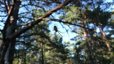 Photo: Cross spider