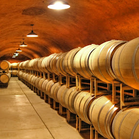 Wine Cellar and Barrels by Arvind Mallya - Buildings & Architecture Other Interior ( wine, cellar, barrels, benziger, sonoma,  )