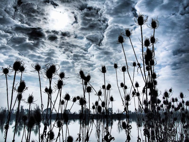Verso il cielo di trifoglio
