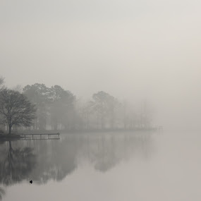 Lost in A Fog by Ruby Stephens - Landscapes Waterscapes ( reflection, lake greenwood sc, waterscape, fog, trees, mirror image, lake, dock )