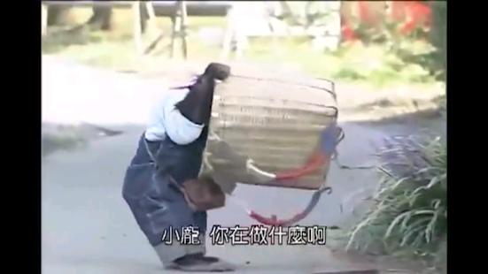 Japanese Monkey - náhled