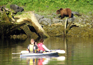 Photo: Kayaking with a Grazing Brown Bear