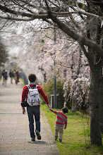 """Photo: This photo appeared in an article on my blog on Mar 26, 2013. この写真は3月26日ブログの記事に載りました。 """"More Early Cherry Blossoms along the Kamo River"""" http://regex.info/blog/2013-03-26/2229"""