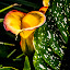 Outstanding Calla Lily by Ed Stines - Flowers Flower Gardens ( flowers, usa, calla, nature, yellow calla, garden flower, flower garden, lilies, flower, wilson, nc, calla lily, plant, lily, garden,  )