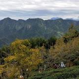 銀杏森林茶餐廳