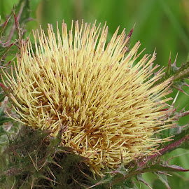 by Mike Dinkens - Nature Up Close Other plants