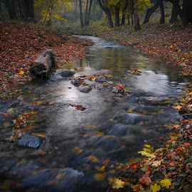 orlowo 2 by Piotr Kutolowski - Landscapes Waterscapes ( leaves, stream, autumn, river, water )