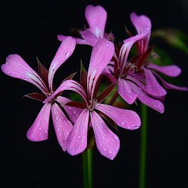 by Manuela Dedić - Flowers Flowers in the Wild