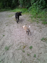 Photo: Iso koira kiinnostaisi, mutta se menee karkuun.