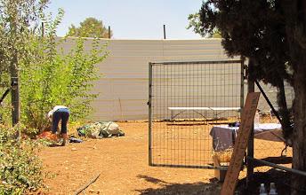Photo: הכנת הגינה לחגיגה הראשונה. צילום: הרולד צבי ברגשטיין