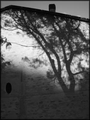 L'albero delle streghe di hermit.wolf