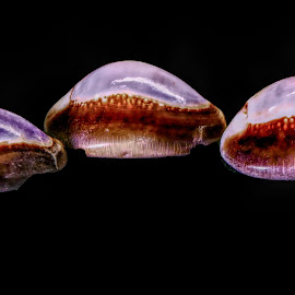 Three Shells by Dave Walters - Nature Up Close Other Natural Objects ( nature, seashell, lumix fz2500, abstract, colors )