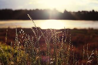 Photo: Homebush  #grasspoker #flowerphotography  #naturephotography  #nikon  #nikonshooters  #breakfastclub