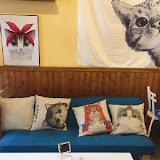 貓奴小姐-貓咪咖啡廳