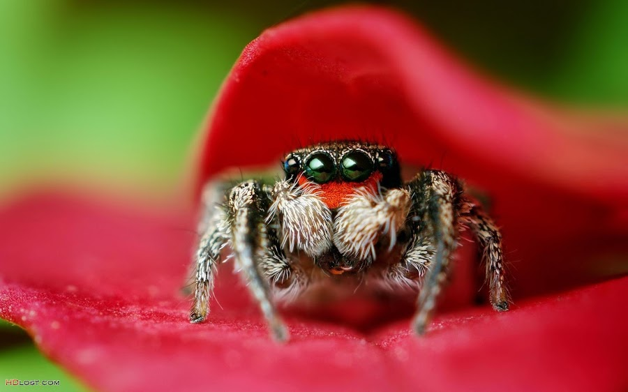 by Angga Fantastic - Animals Insects & Spiders