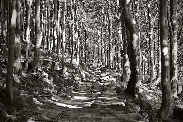Tra i boschi della Strega  di esserre