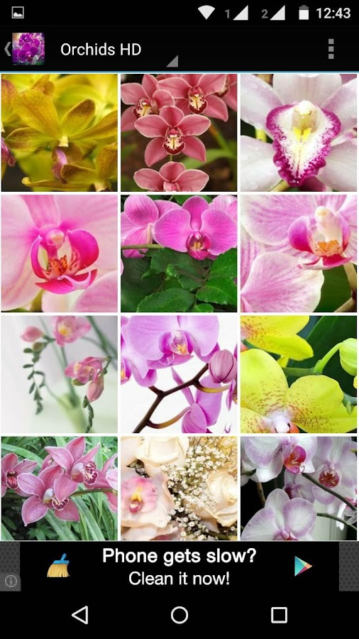 Orchid Flowers HD Wallpaper - Android Apps on Google Play