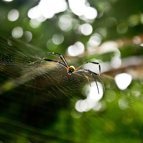 crawl into by Mahesh Thiru - Animals Insects & Spiders