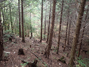 植林の作業道に