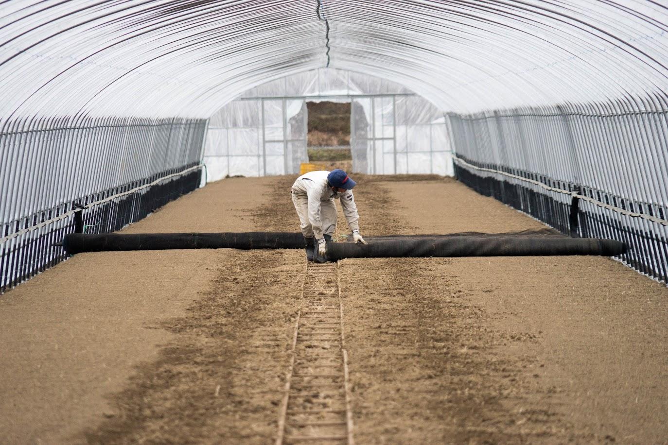 床土へのネット貼り作業