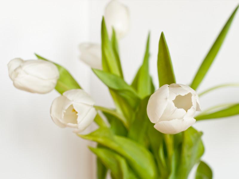 Tulipani di utente cancellato