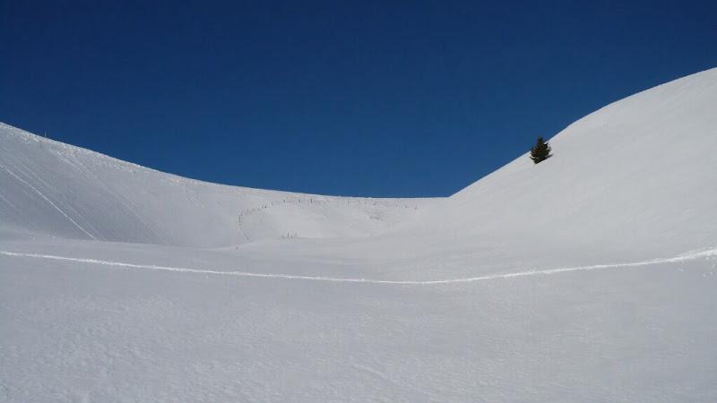 Albero di Francesco Scavazzin