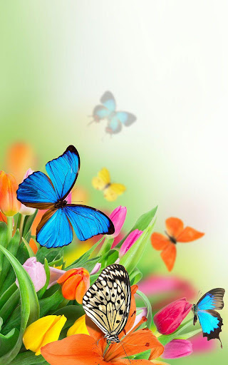 Butterfly LiveWallpaper