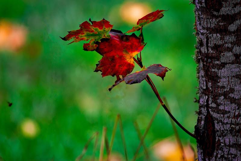 foglia d'autunno di Fiorenza Aldo Photo