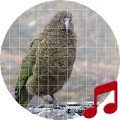 New Zealand Bird Sounds ~ Sboard.pro Android APK Download Free By Sboard.pro