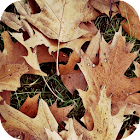 Autumn Wallpapers icon