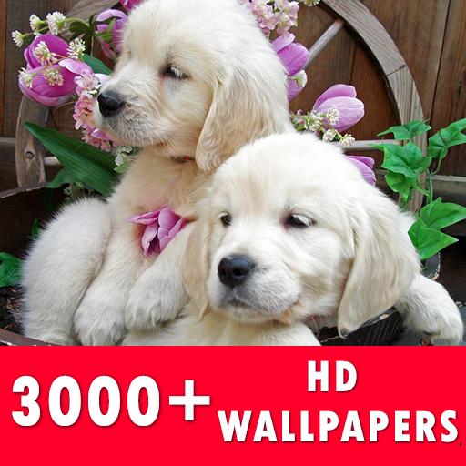 Golden Retriever Live Wallpapers HD