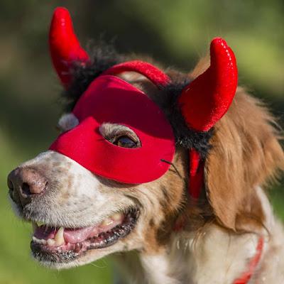 Lea, cane ironico di Patrizio