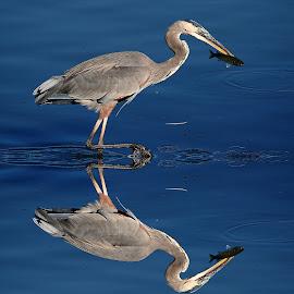 La pêche est bonne by Gérard CHATENET - Animals Birds